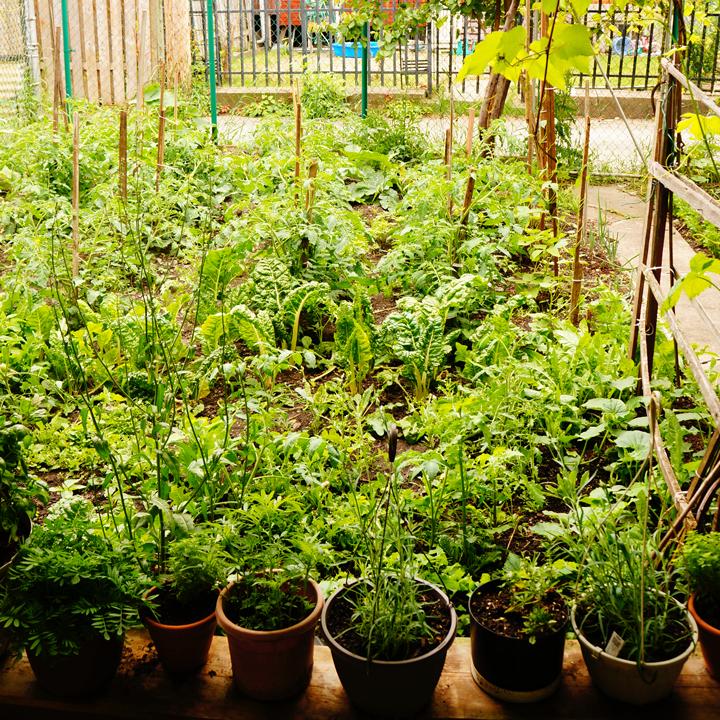 garden-sq-720
